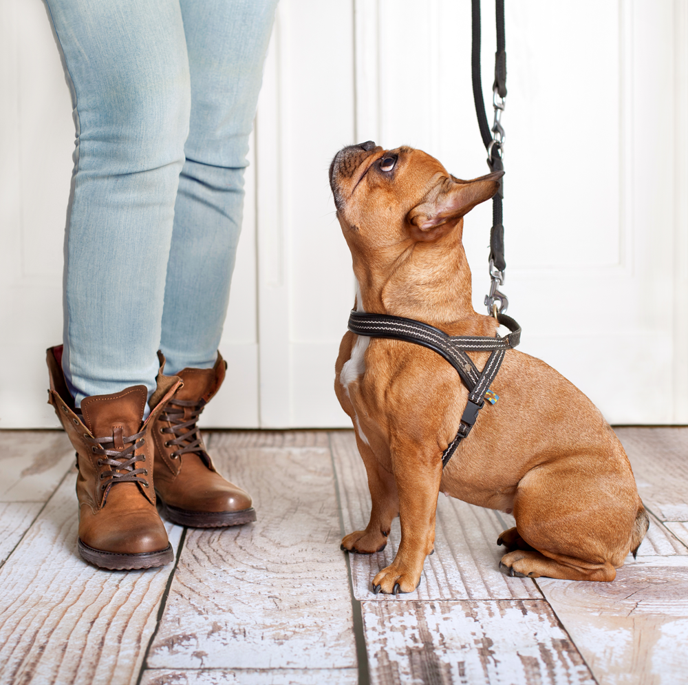 Positive dog training with treat