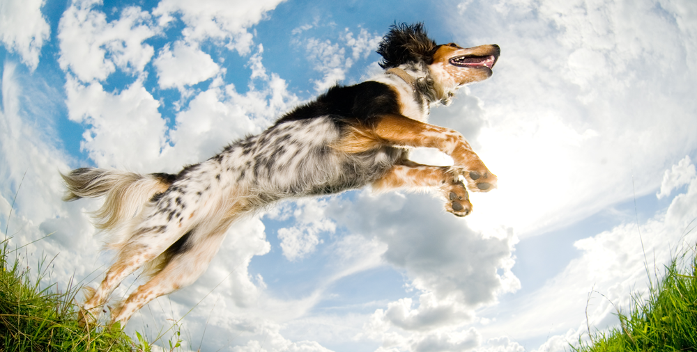 Hyperactive dog jumping outdoors