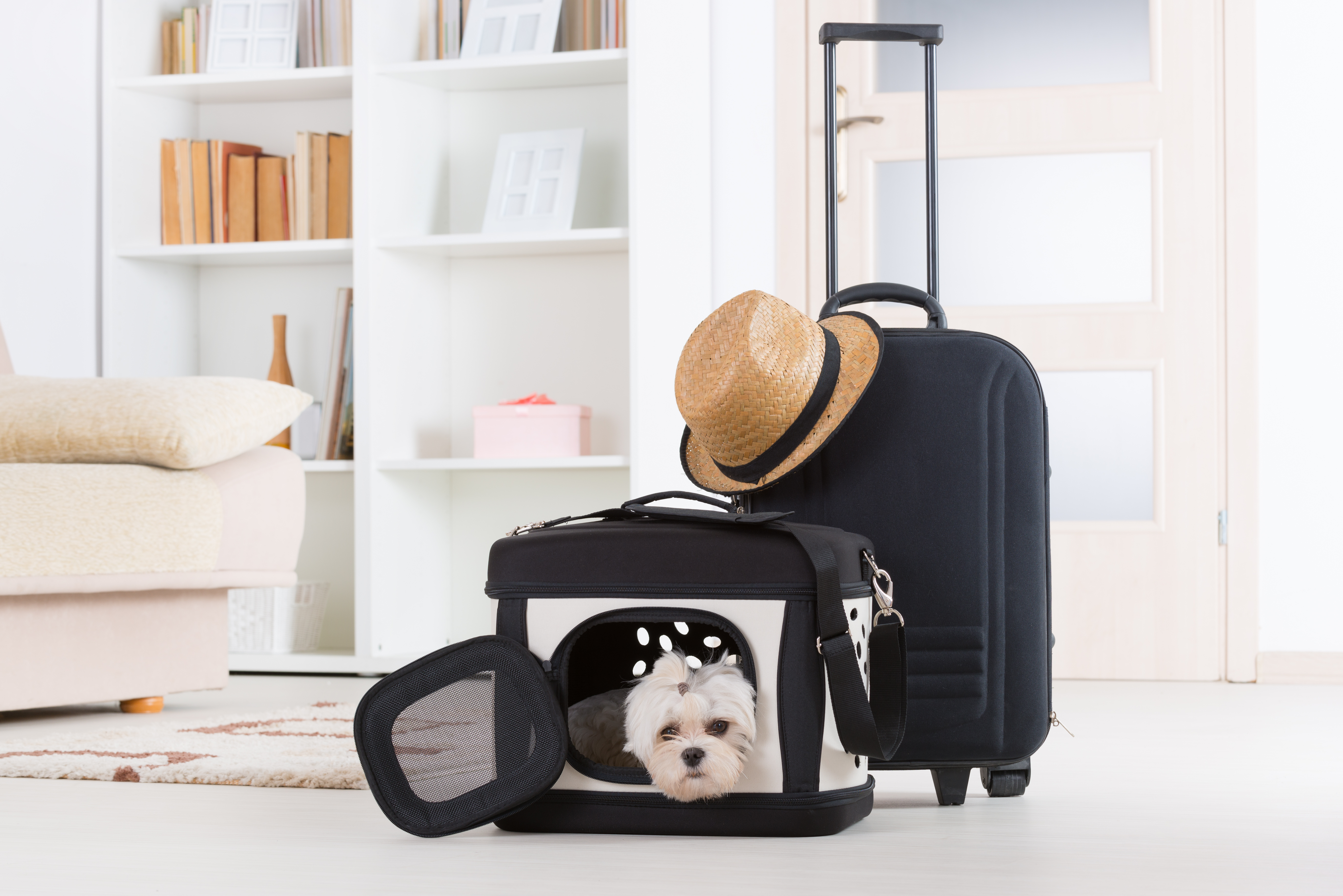 Dog in travel crate ready for flying